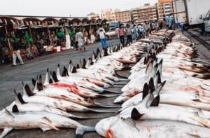 shark_market